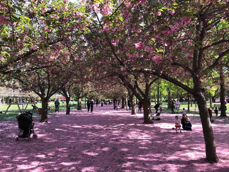 Brooklyn Botanic Garden on a Spring day, New York City, USA.