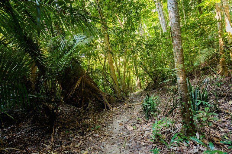 Jungle trekking to hidden secret beach on Pangkor island in Malaysia. Beautiful wild forest in south east Asia.