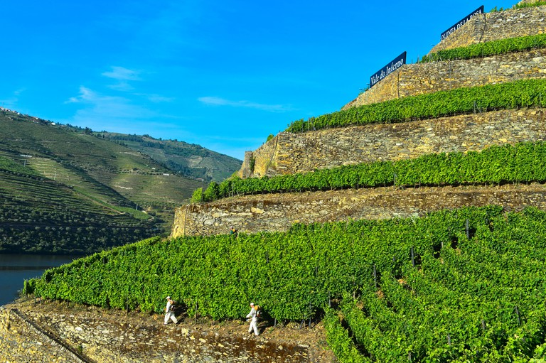 Workers in the terraced vineyard Hell Valley, Vale do Inferno, winery Quinta de la Rosa, Pinhao, Douro Valley, Portugal