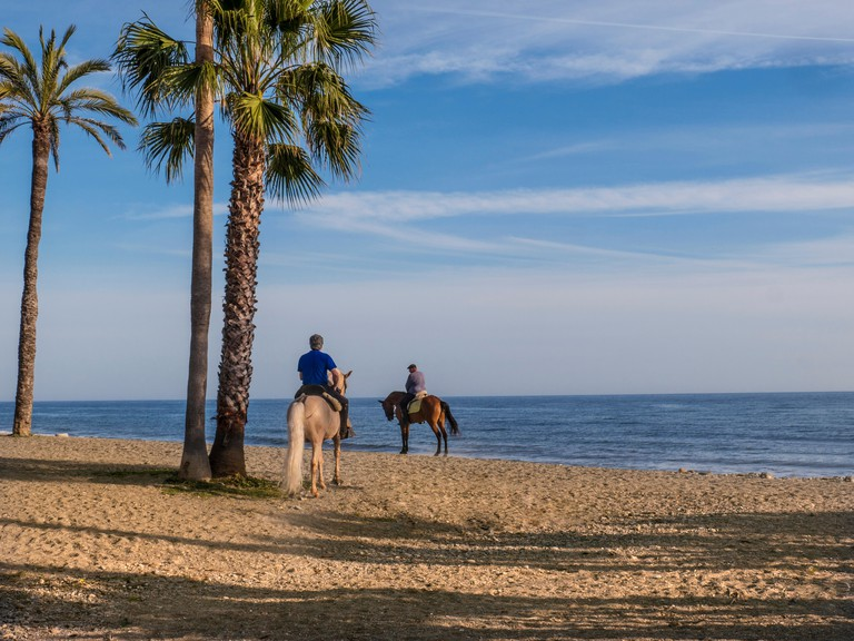 Horses on exercise in the cooler late afternoon air at San Pedro de Alcantara beach Costa del Sol Marbella Spain