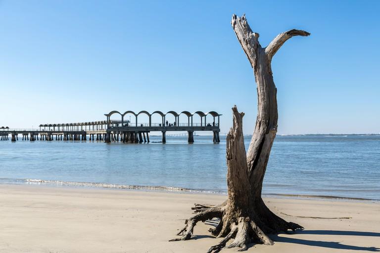 Dead tree and pier, Driftwood beach, Jekyll Island, GA, USA