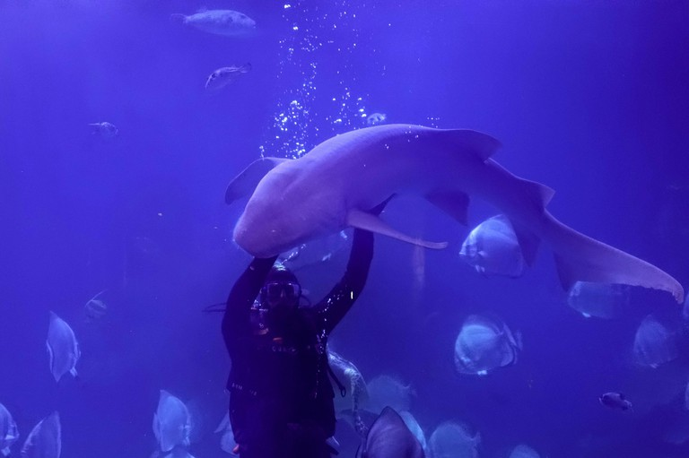 """A diver feeds a shark and fish during a show for visitors at the Hurghada Grand Aquarium """"Red Sea in Glass"""" during summer holidays in Hurghada, Egypt July 25, 2019. Picture taken July 25, 2019. REUTERS/Amr Abdallah Dalsh"""
