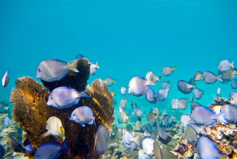 APTR1N ST JOHN, US Virgin Islands - Underwater shot of tropical reef in the Caribbean