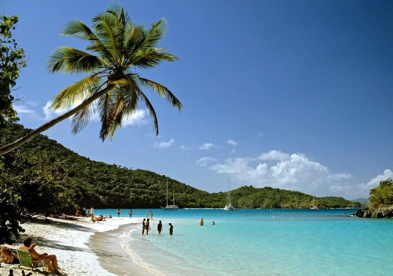 B0HBY7 Palm tree, Trunk Bay, St. John's Island National Park, U.S. Virgin Islands, Caribbean
