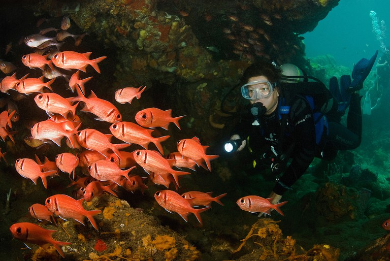 Diver and soldier fish, St vincent, Grenadines