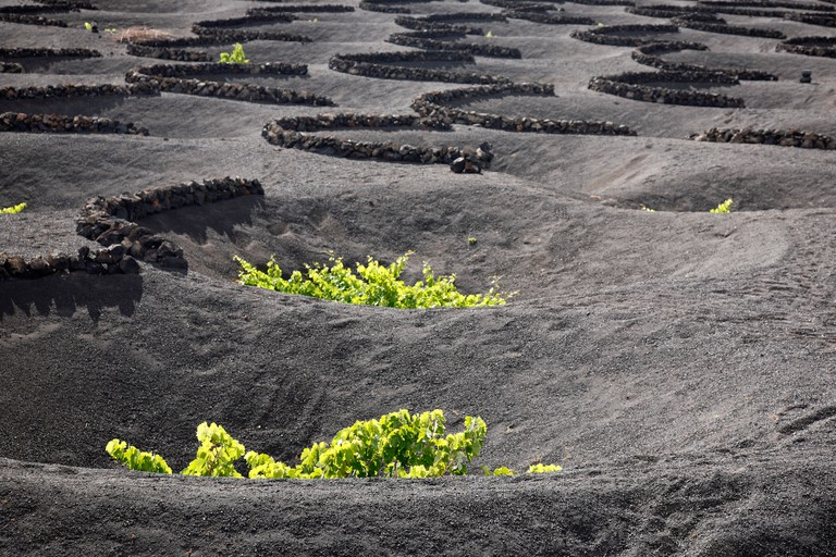 Vineyards and craters in volcanic soil dug to protect grape vines from the wind in La Geria, Lanzarote, Canary Islands, Spain