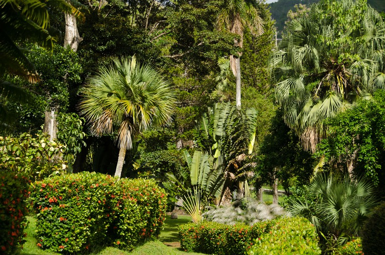 C301A9 Botanical Gardens, oldest in the Western Hemisphere, at Kingstown, Saint. Vincent