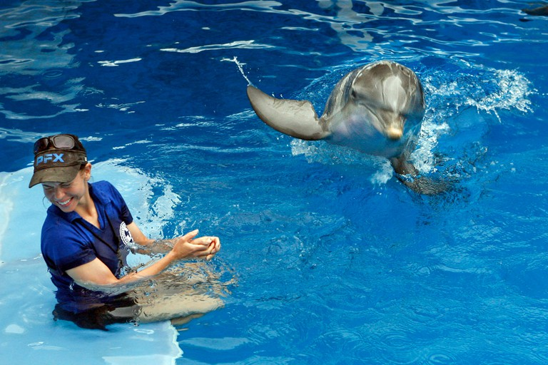 Abby Stone turns away to avoid the splash as Winter, the tail-less dolphin is about to make a splash during a recent training session in his tank at the Clearwater Marine Aquarium