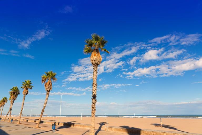 DWHD36 Valencia Malvarrosa Las Arenas beach palm trees in Patacona of Alboraya spain