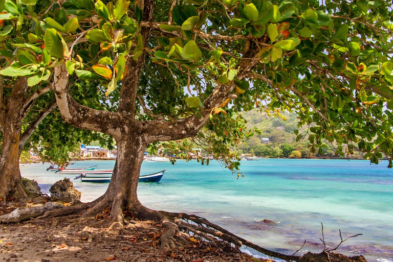 View of the Caribbean Sea from under a tree in Sapzurro, Colombia