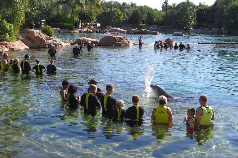 Discovery Cove Seaworld Orlando Florida
