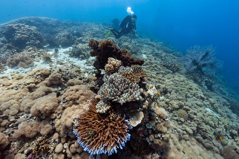 Diver and hard corals on the reef off the island of Menjangan, Bali, Indonesia