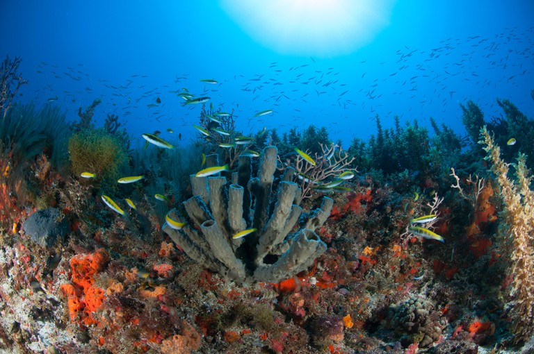 F8MAKR Underwater view of fish swimming at northern reef of the Yucatan peninsula, Cabo Catoche, Quintana Roo, Mexico