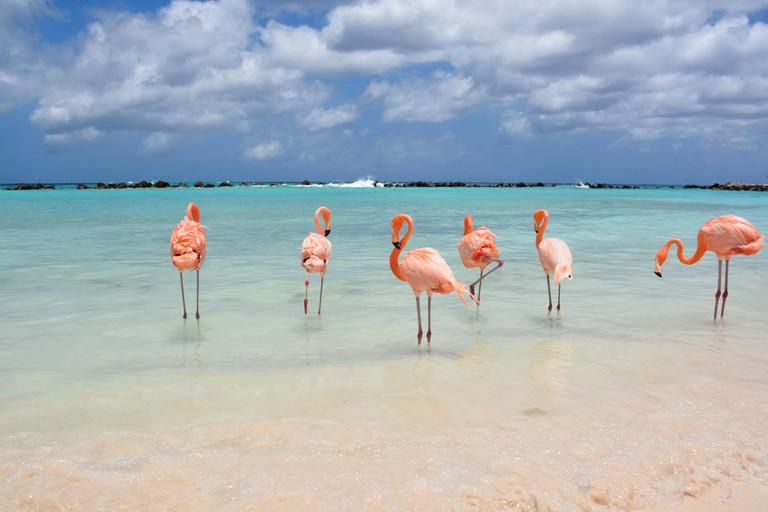 Flamingos on Renaissance Island - Aruba