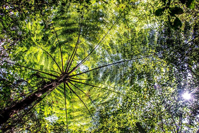 H6BEAM Bali Indonesia green palm tree in the Jungle lake Tamblingan