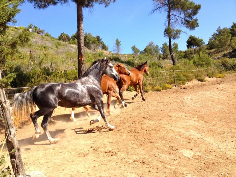 Ibiza Valley