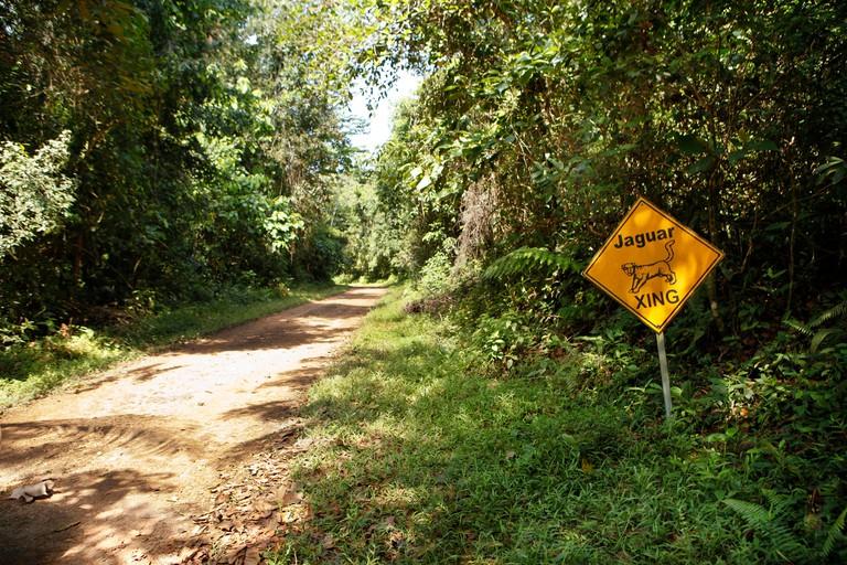 BELIZE, Hopkins, the road into Cockscomb Basin Wildlife Sanctuary