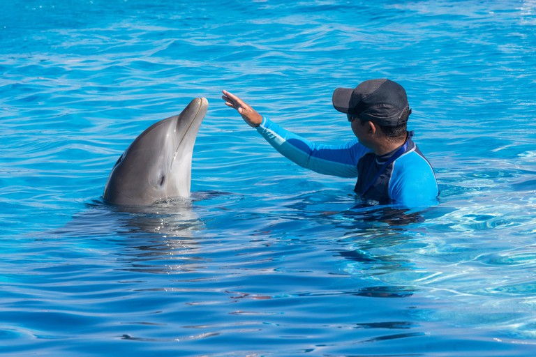 Trainer training a dolphin in the pool