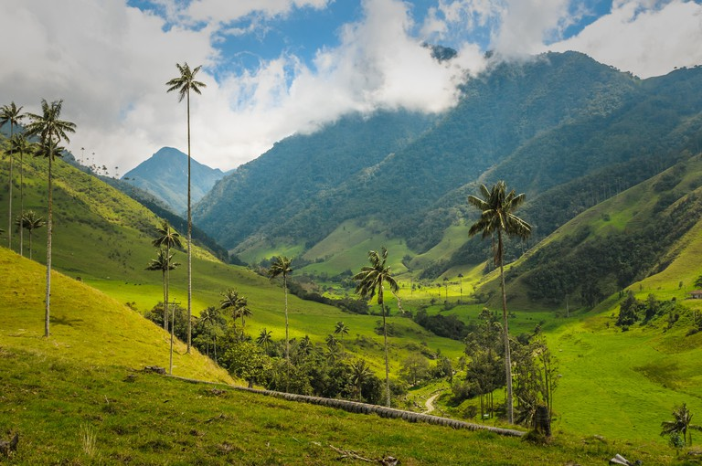 Wax palm trees of Cocora Valley, Colombia. Image shot 06/2017. Exact date unknown.