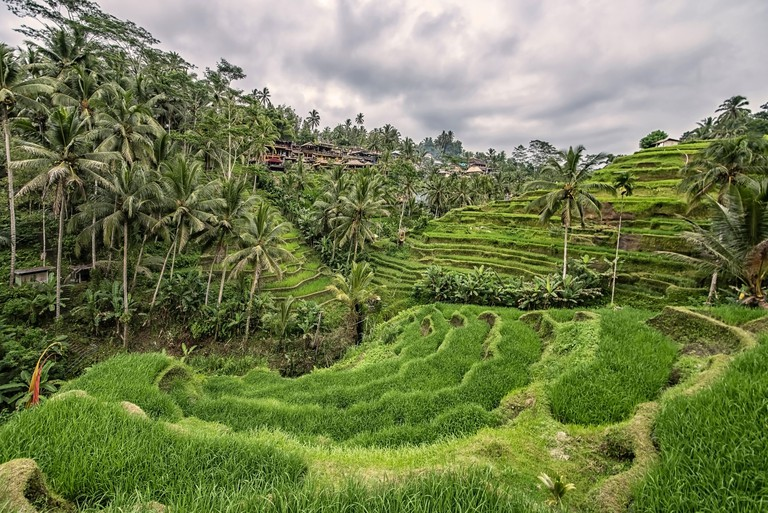 tegallalang rice terrace in Ubud, Bali - T4ME5Y