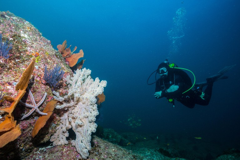 A scuba diver admires a section of reef in The Corridor, a popular dive area in Los Cabos in the Sea of Cortez, Mexico.