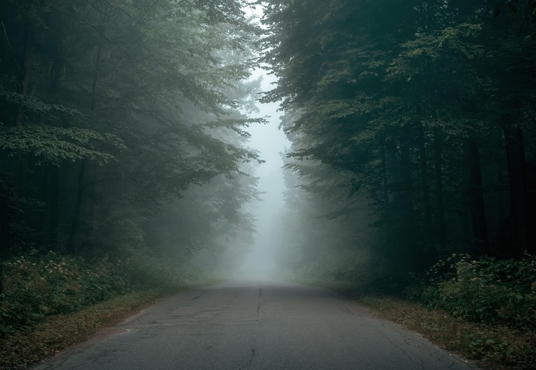 Empty forest road on a foggy morning with copy space