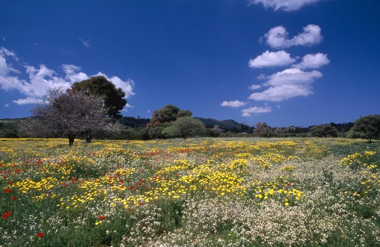 The Greek Island of Zante