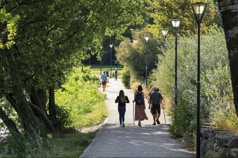 France, Vaucluse, Avignon, ile de La Barthelasse, chemin des Berges