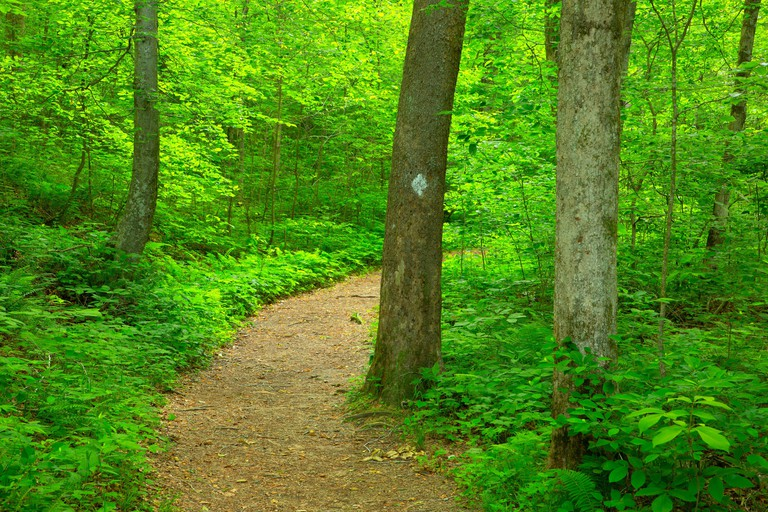 Hiking trail, Hemlock Cliffs Special Place, Hoosier National Forest, Indiana
