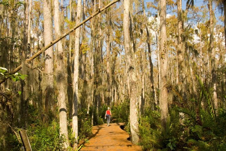 Florida  Loxahatchee National Wildlife Refuge cypress swamp boardwalk