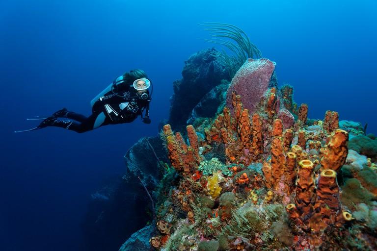 Diver looking at a coral reef, ridge, Yellow tube sponge (Aplysina fistularis), Little Tobago, Speyside, Trinidad and Tobago