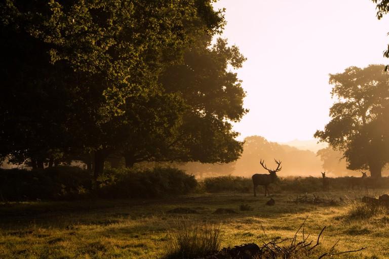Richmond Park. daniel-buckle-DpinkgB4lB0-unsplash