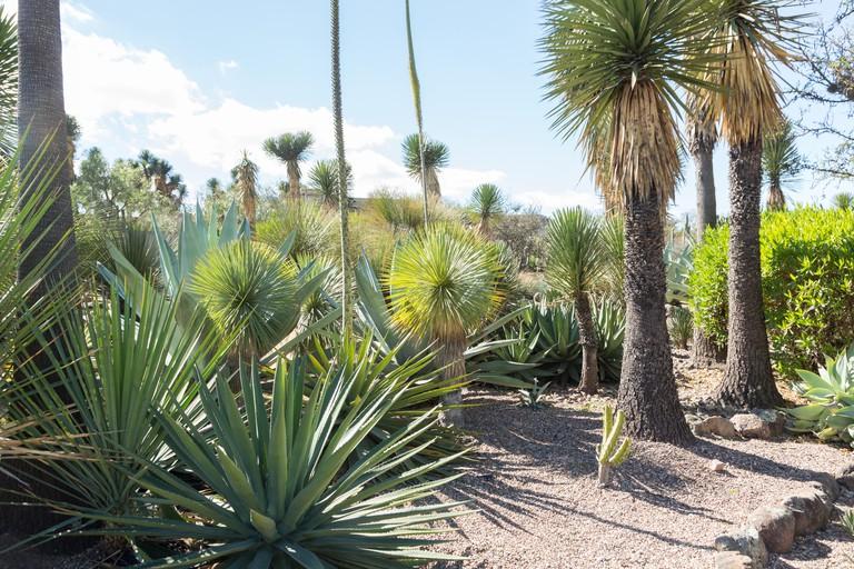 El Charco del Ingenio Botanical Garden in San Miguel de Allende
