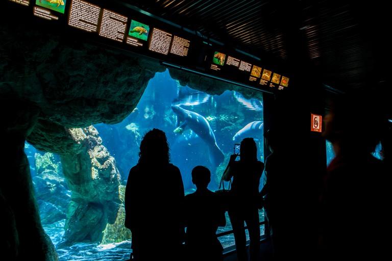Unidentified people at Genoa aquarium.