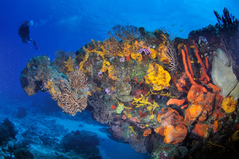 MMHN2B Diver observes a healthy coral reef in Cozumel, Mexico, Caribbean Sea