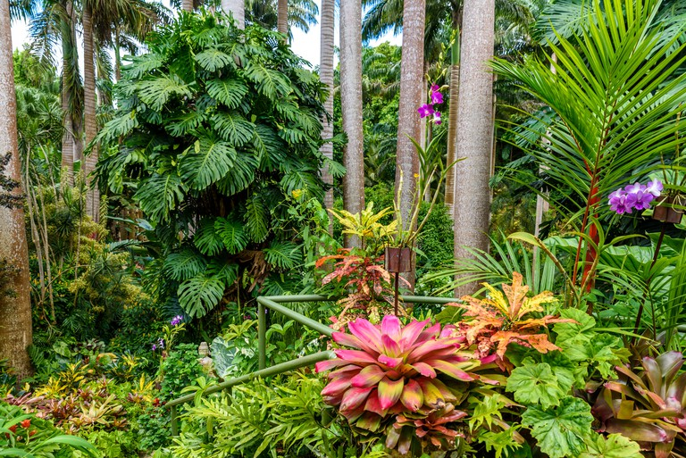 Hunte´s Botanical Garden on the Caribbean island of Barbados. It is a paradise destination with a white sand beach and turquoiuse sea.