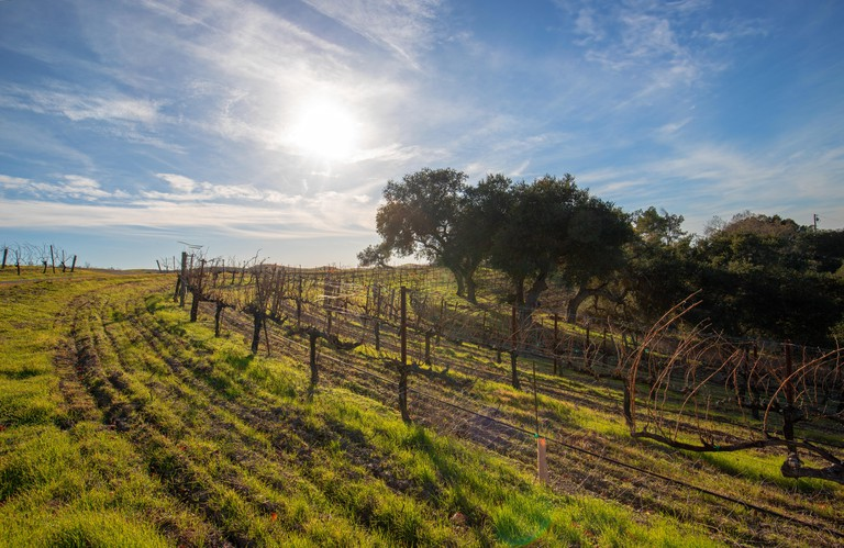 Winter sun over vineyard in Central California United States