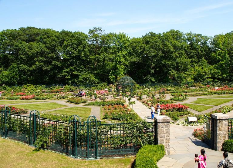 New York - United States, June 26, 2015 -Peggy Rockefeller Rose Garden at the New York Botanical Garden in Bronx in New York City