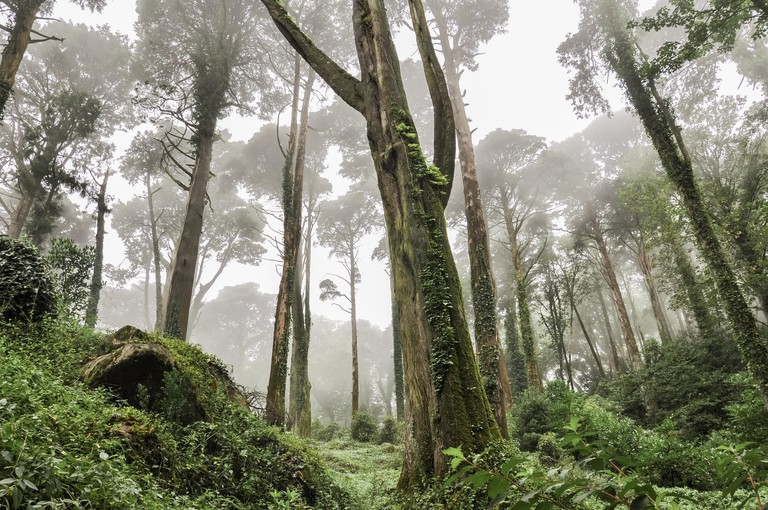 Foggy morning in the forest in Sintra, Portugal