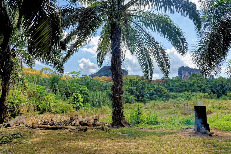 Walking in the tropical forest - Krabi - Thailand