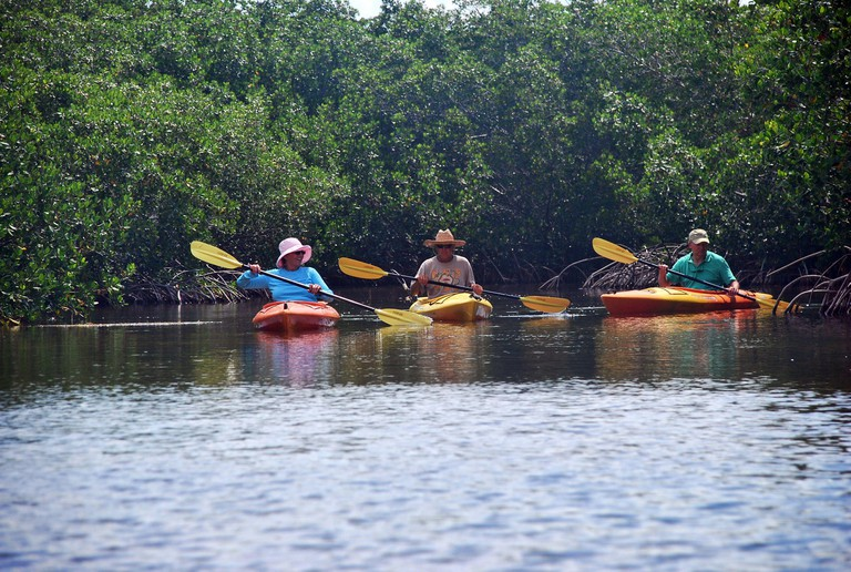 2F0D54D Kayce Homminga, left, Capt. Bill Keogh of Big Pine Kayak Adventures and Henry Adams, a kayaking enthusiast from Oklahoma City, Oklahoma, paddle their kayaks by a mangrove island in the backcountry north of Big Pine Key, Florida. (Photo by Steve Waters/Sun Sentinel/MCT/Sipa USA)