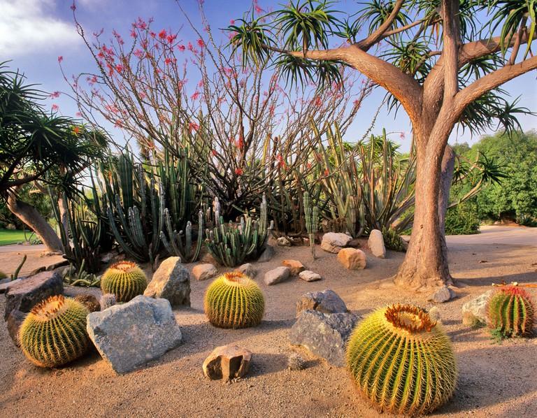 Cactus gardens at Balboa Park San Diego California