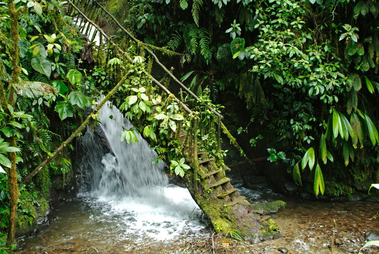 Steps leading to Waterfall REINA in the National Park Mindo-Nambillo in Ecuador