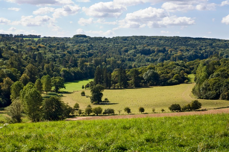 Sheep grazing the valley of the River Coln in front of Chedworth Woods near the Cotswold village of Yanworth, Gloucestershire