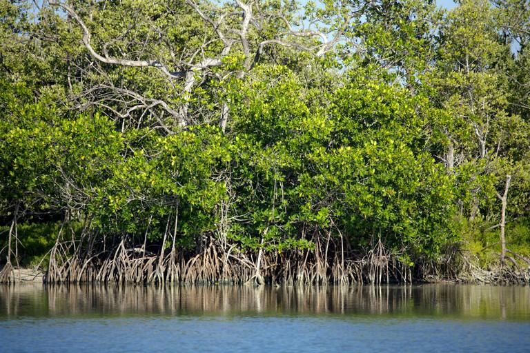 Mangrove swamp on Holbox Island, Quintana Roo, Yucatan Peninsula, Mexico, a unique Mexican destination in the Yucatan Channel
