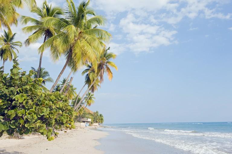 Palm trees on beach, Jacmel, Haiti, West Indies, Caribbean, Central America
