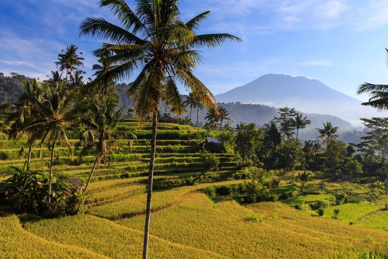 DDXTPC Indonesia, Bali, Sidemen, Rice Fields and Gunung Agung Volcano