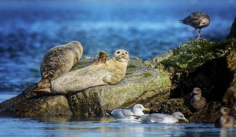 Seal Waving Hello at Robert Moses State Park
