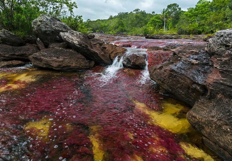 Riverweed (Macarenia clavigera) in river, Cano Cristales, Sierra De La Macarena National Park, Meta, Colombia