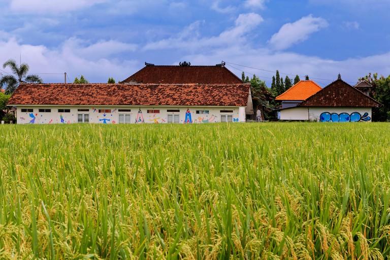 PF8807 Rice fields in Canggu, Bali
